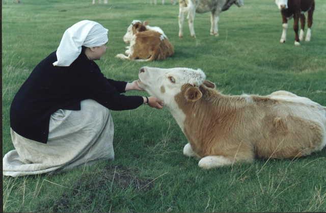 Девушка в платке и корова