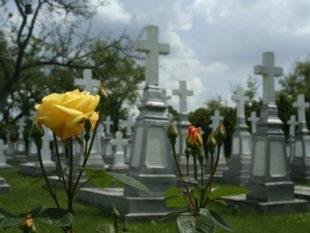 Стать бессмертным и… умереть