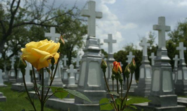 кладбище, жёлтый цветок, смерть, могила